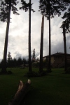 Tornado Enumclaw, WA (7)